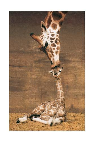 giraffe_kiss